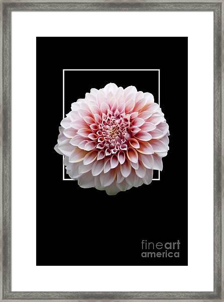 Flower In Frame -4 Framed Print