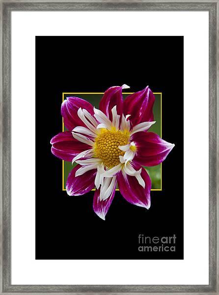 Flower In Frame -5 Framed Print