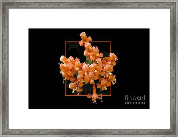 Flower In Frame -6 Framed Print