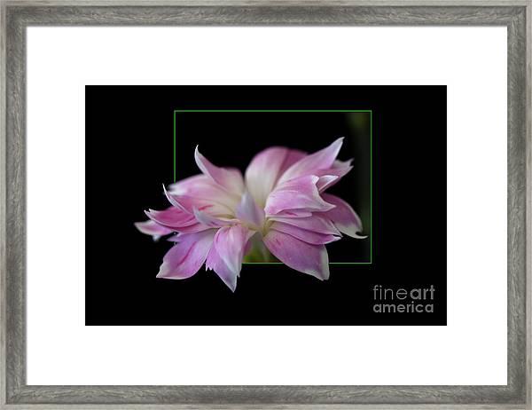 Flower In Frame Framed Print