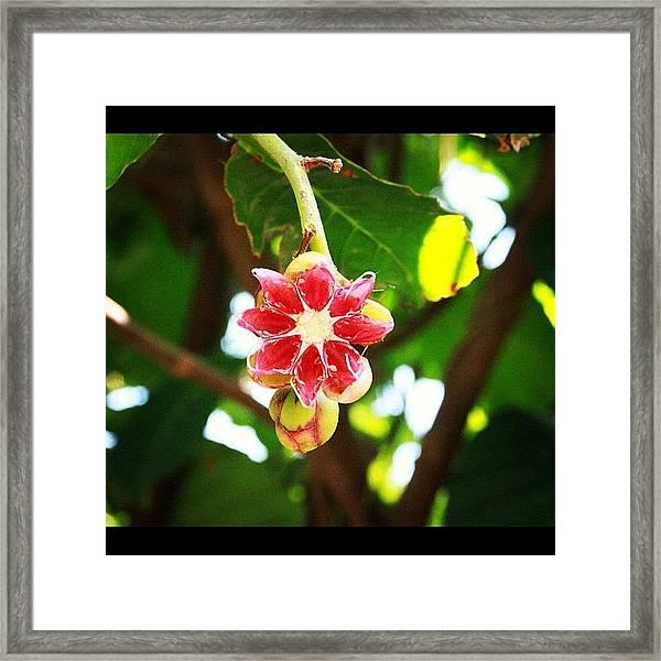 Flower Or Fruit?? Another Wonder Of Framed Print