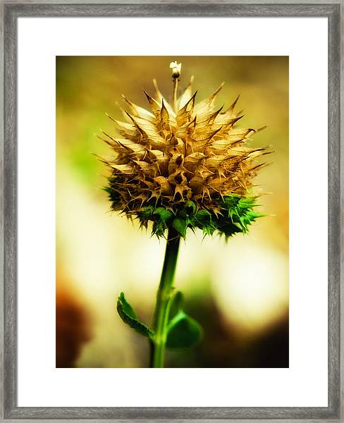 Flowered Thorns Framed Print