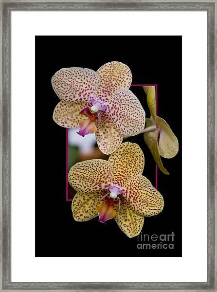 Flowerin Frame -8 Framed Print
