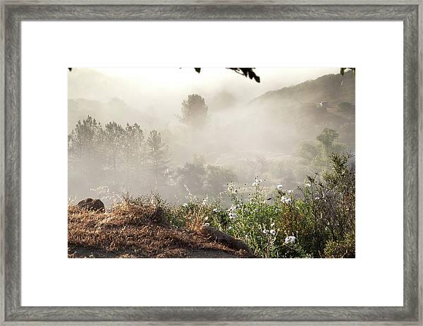 Flowers In The Mist Framed Print