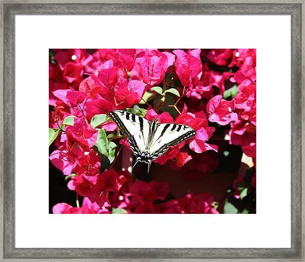 Flutter By Framed Print