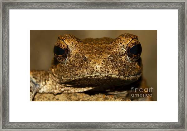 Foam Nesting Frog Framed Print