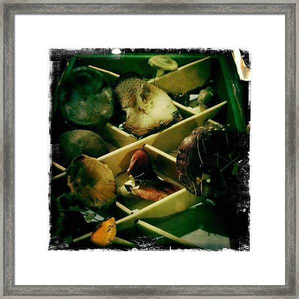 Forest Ranch Mushrooms Framed Print