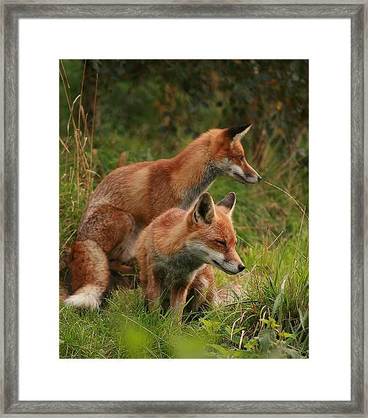 Foxy Pair Framed Print