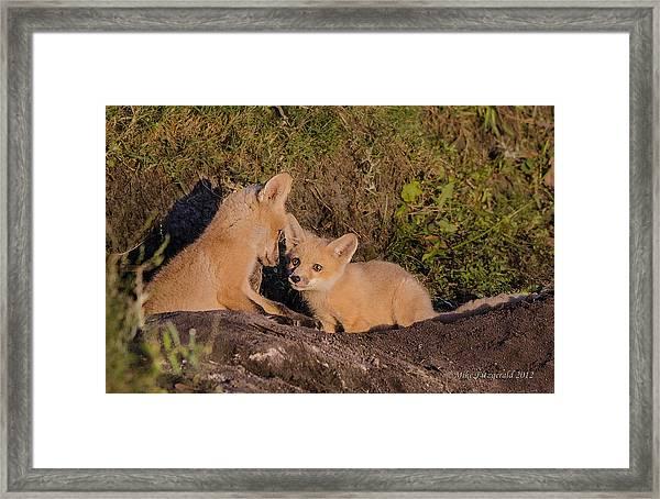 Foxy Talk Framed Print