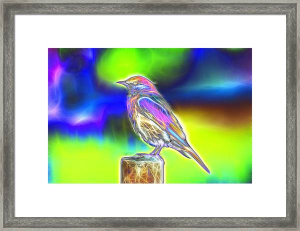 Fractal - Colorful - Western Bluebird Framed Print