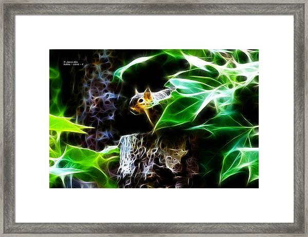 Fractal - Peek A Boo II - Robbie The Squirrel - 8242 Framed Print