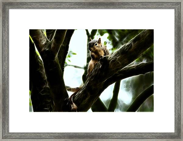 Fractal - Thumb Sucker - Robbie The Squirrel - 8574 Framed Print