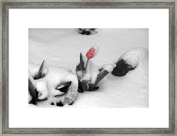 Frosted Pink Framed Print