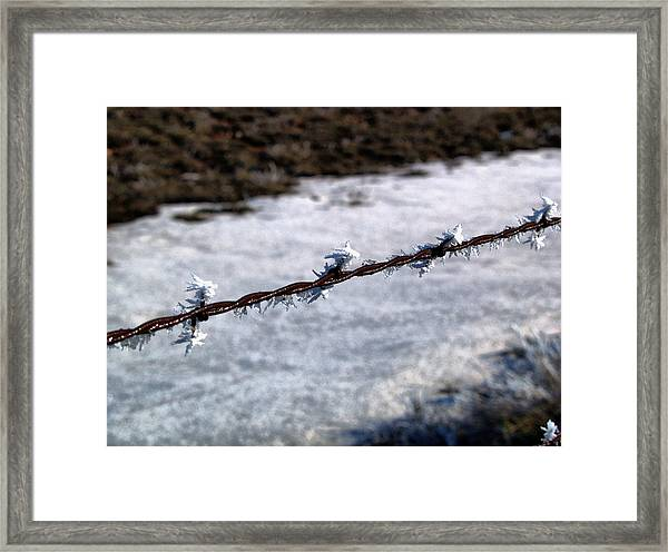 Frosty Barb Wire Framed Print