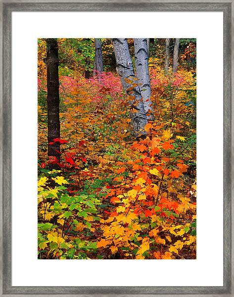 Full Fall Palette Framed Print