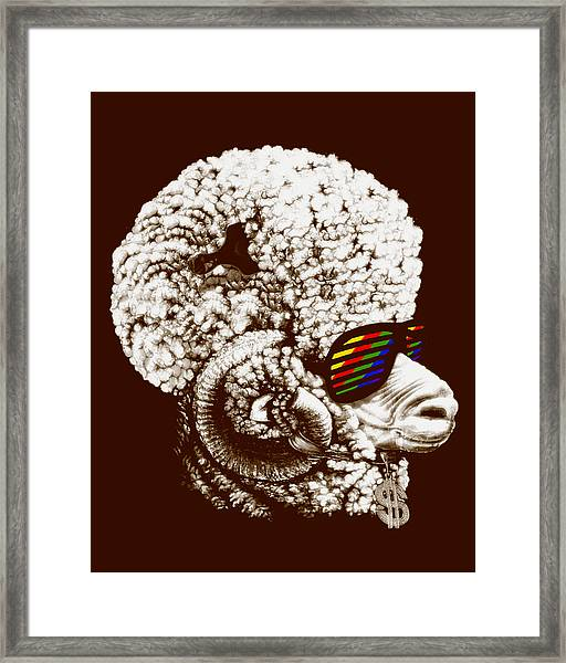 Funky Sheep Framed Print by Bojan Bundalo