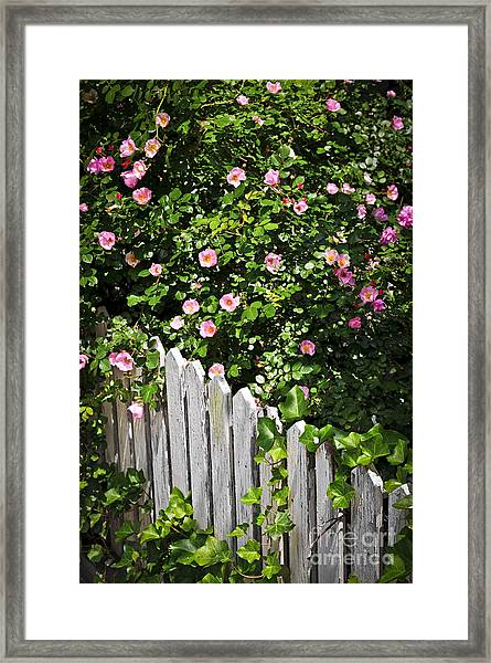 Garden Fence With Roses Framed Print