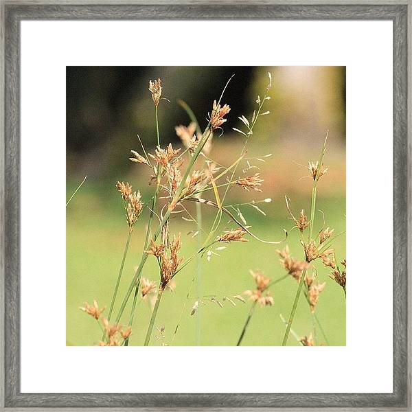 Garden Grass From A Different Angle, By Framed Print