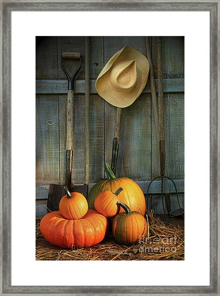 Garden Tools In Shed With Pumpkins Framed Print