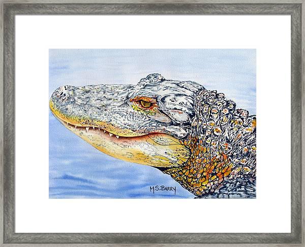 gator Alice Framed Print