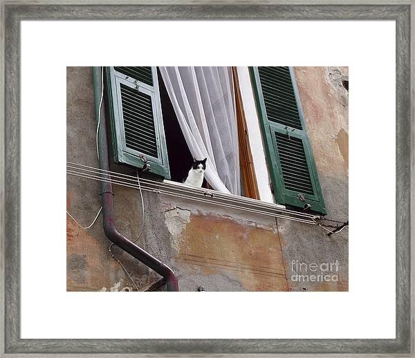 Gatto Framed Print