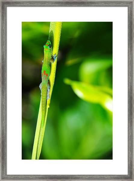 Gecko On A Stick Framed Print