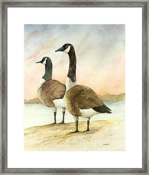 Geese 52012 Framed Print