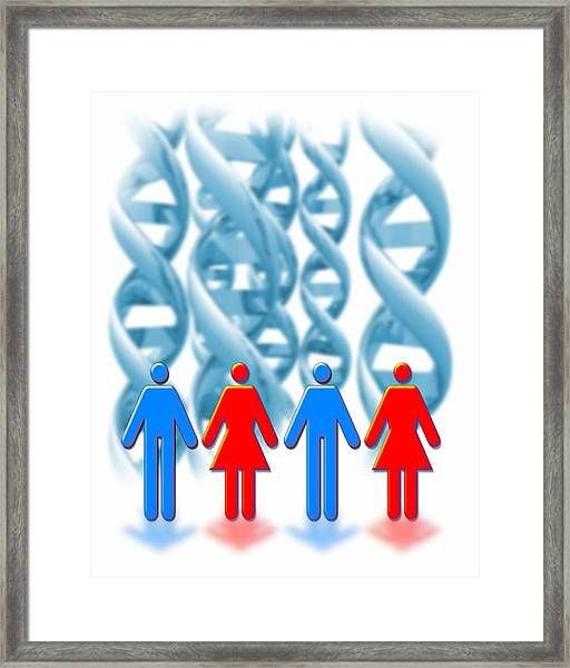 Genetic Sexuality Framed Print