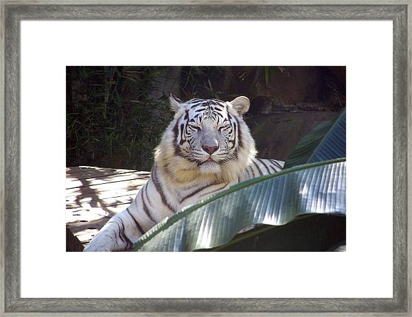 Get Over Here Framed Print