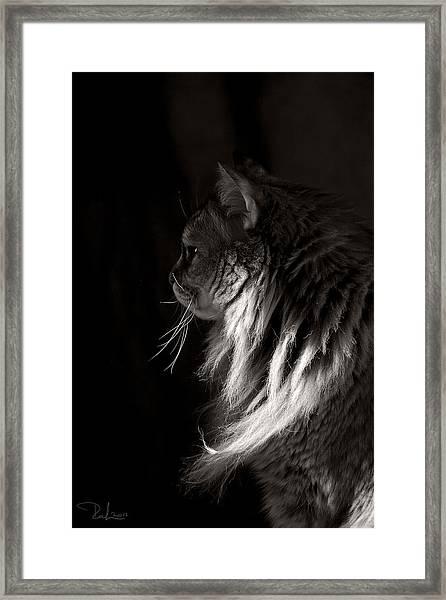 Ghiga In The Dark Framed Print