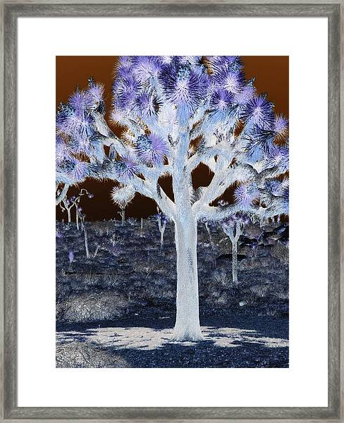 Ghostly Joshua Tree Framed Print by Claire Plowman