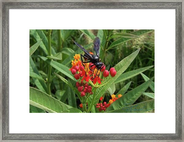 Giant Wasp Framed Print