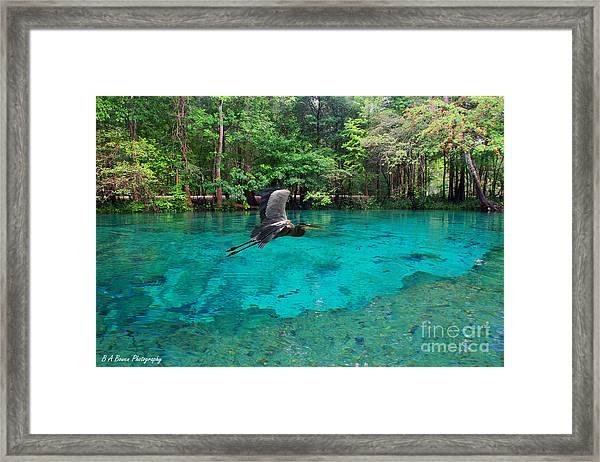 Ginnie Springs Framed Print