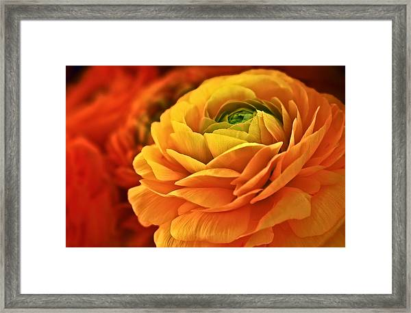 Glistening Blossoms Framed Print by Donna Pagakis
