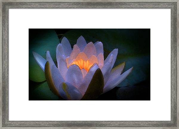 Glow In The Lily Framed Print by Lauren Goia