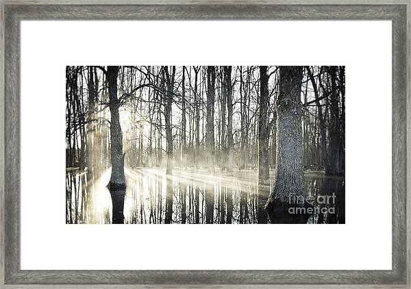 Glowing Woods Framed Print