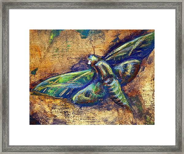 Gold Moth Framed Print
