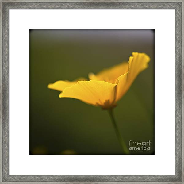 Golden Afternoon. Framed Print