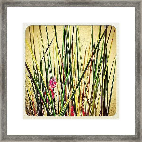 Grasses Framed Print
