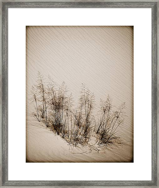 White Sands, New Mexico - Grasses Framed Print