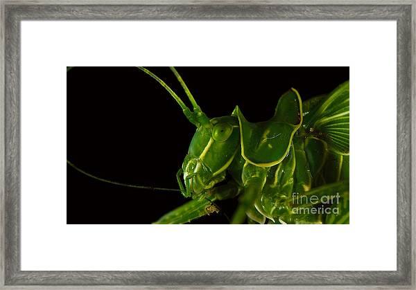 Grasshopper Cleaning Antenna Framed Print