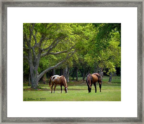 Grazing Pair Of Horses Framed Print