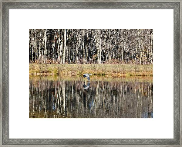 Great Blue Heron In November Framed Print