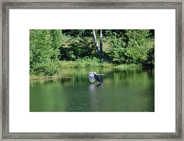 Great Blue Heron's World Framed Print