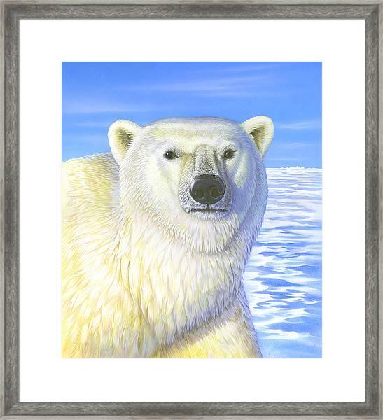 Great Ice Bear Framed Print