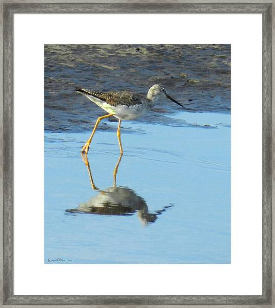 Greater Yellow Legs Framed Print