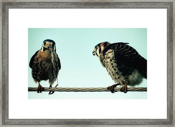 Greedy Bird Framed Print