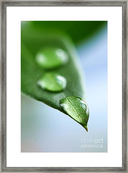 Green Leaf With Water Drops Framed Print
