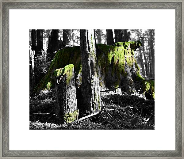 Green Perspective Framed Print