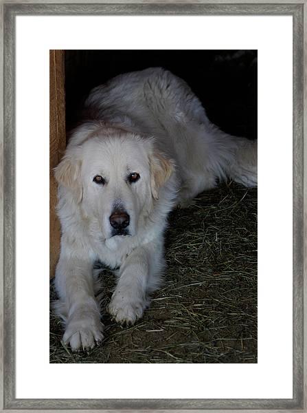 Guarding The Barn Framed Print